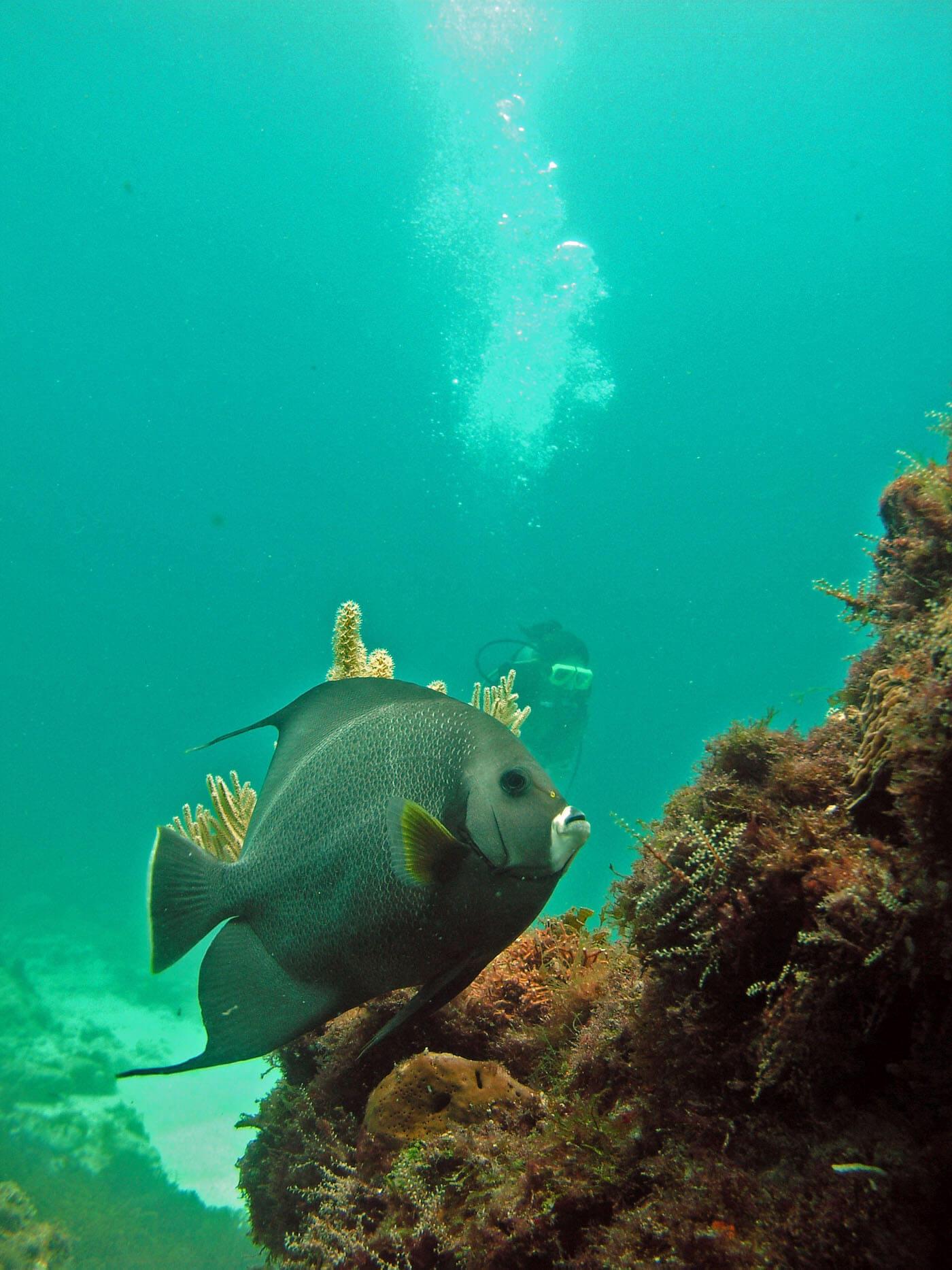 Isla Mujeres Manchones Reef Snorkel Scuba Diving Squalo Adventures-12