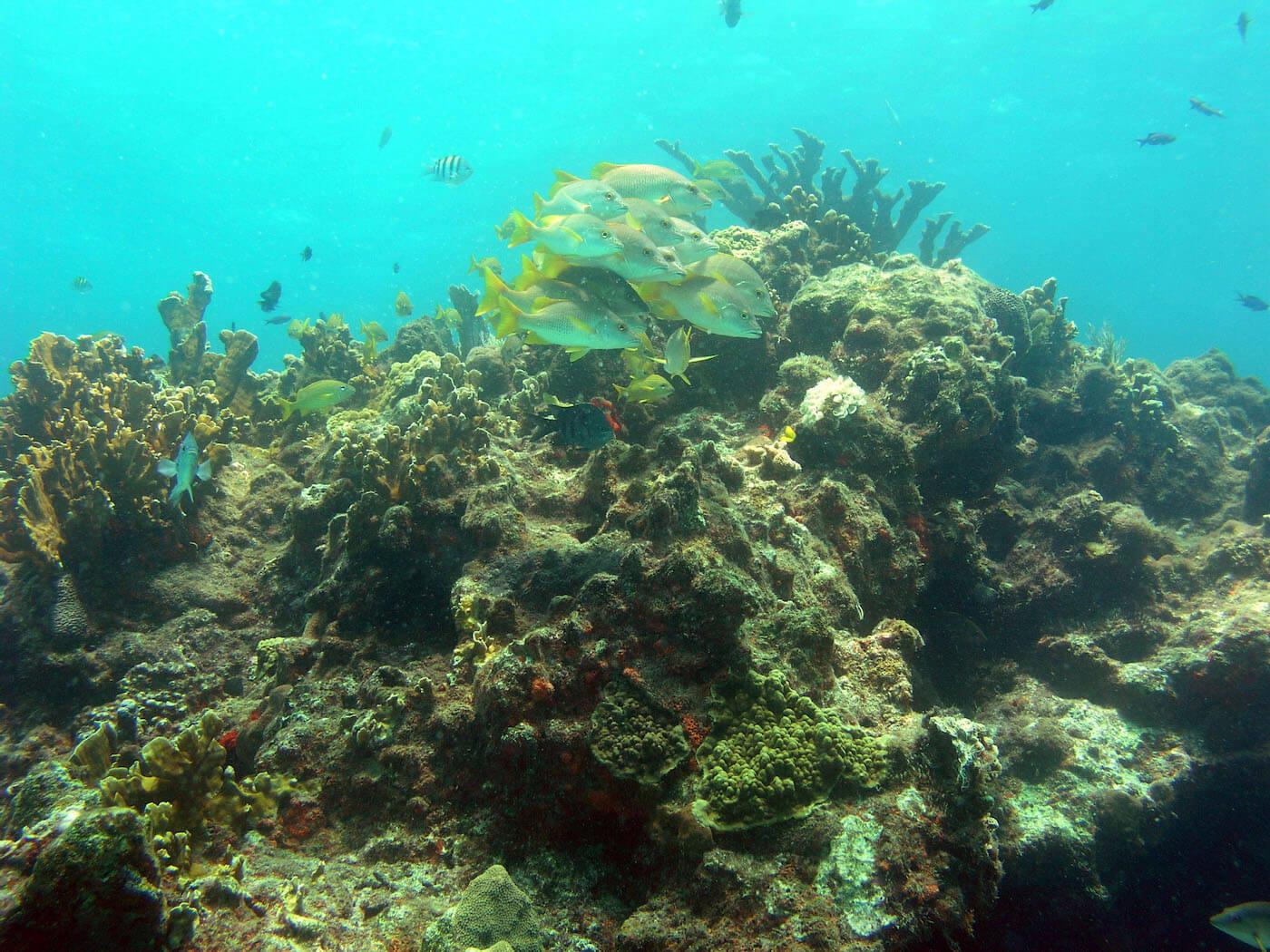 Isla Mujeres Manchones Reef Snorkel Scuba Diving Squalo Adventures-13