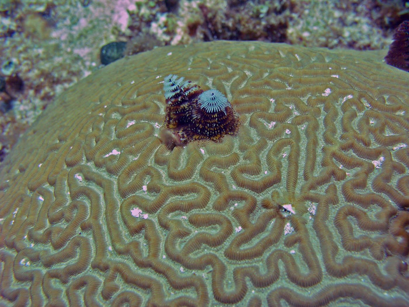 Isla Mujeres Manchones Reef Snorkel Scuba Diving Squalo Adventures-14