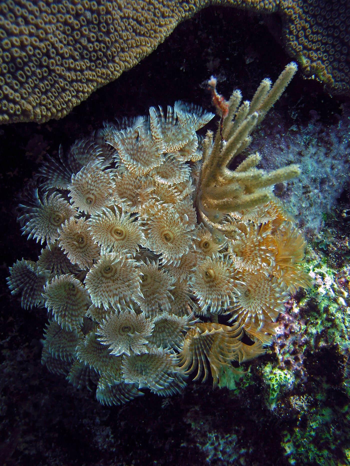 Isla Mujeres Manchones Reef Snorkel Scuba Diving Squalo Adventures-16