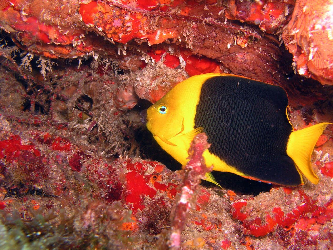 Isla Mujeres Manchones Reef Snorkel Scuba Diving Squalo Adventures-17