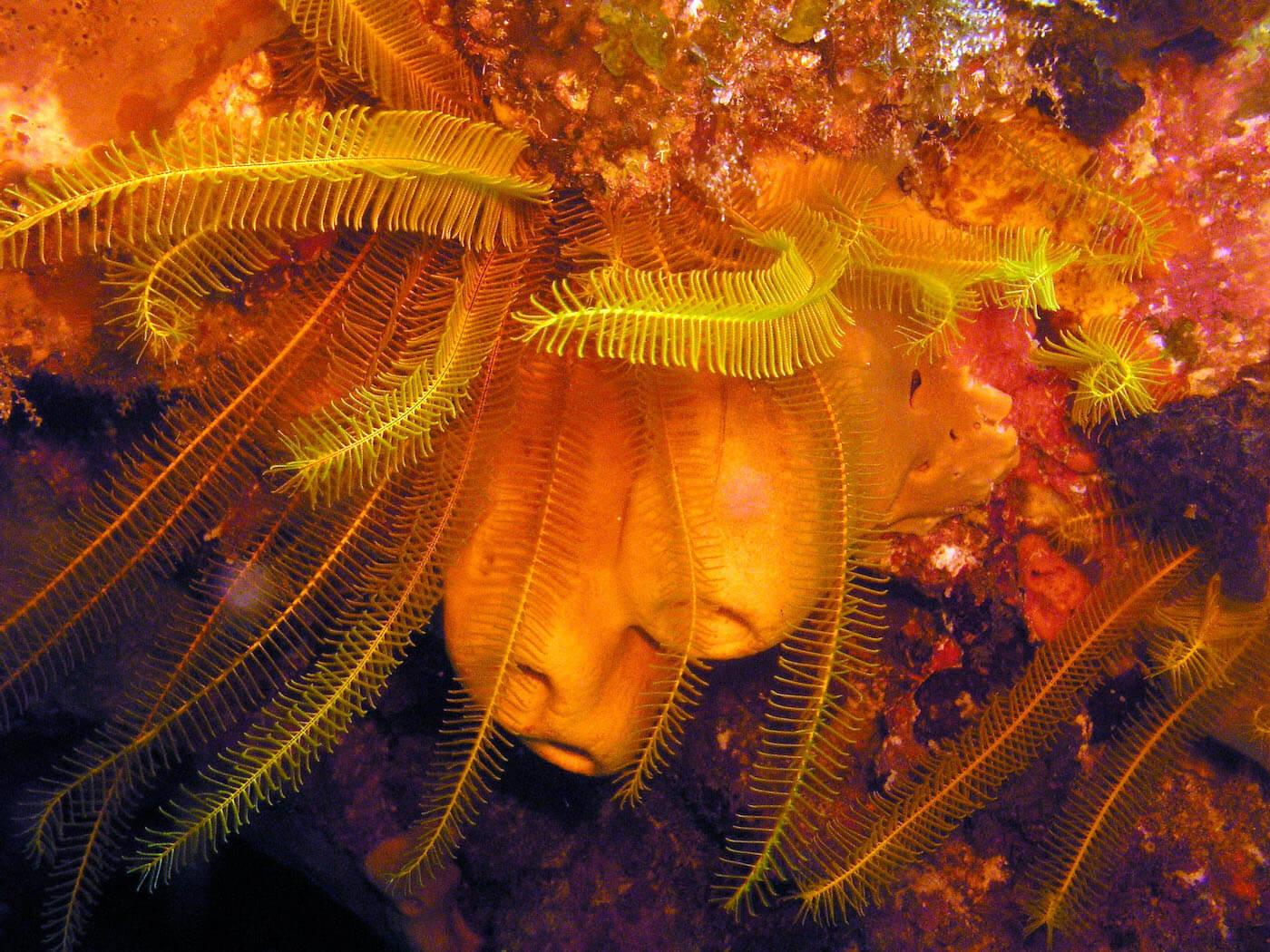 Isla Mujeres Manchones Reef Snorkel Scuba Diving Squalo Adventures-2