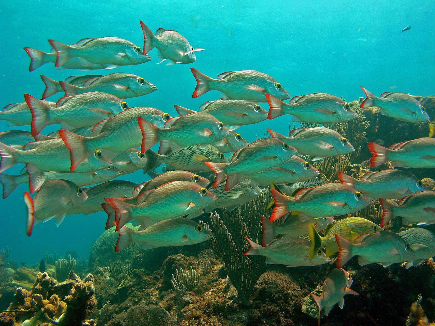 Isla Mujeres Manchones Reef Snorkel Scuba Diving Squalo Adventures-20