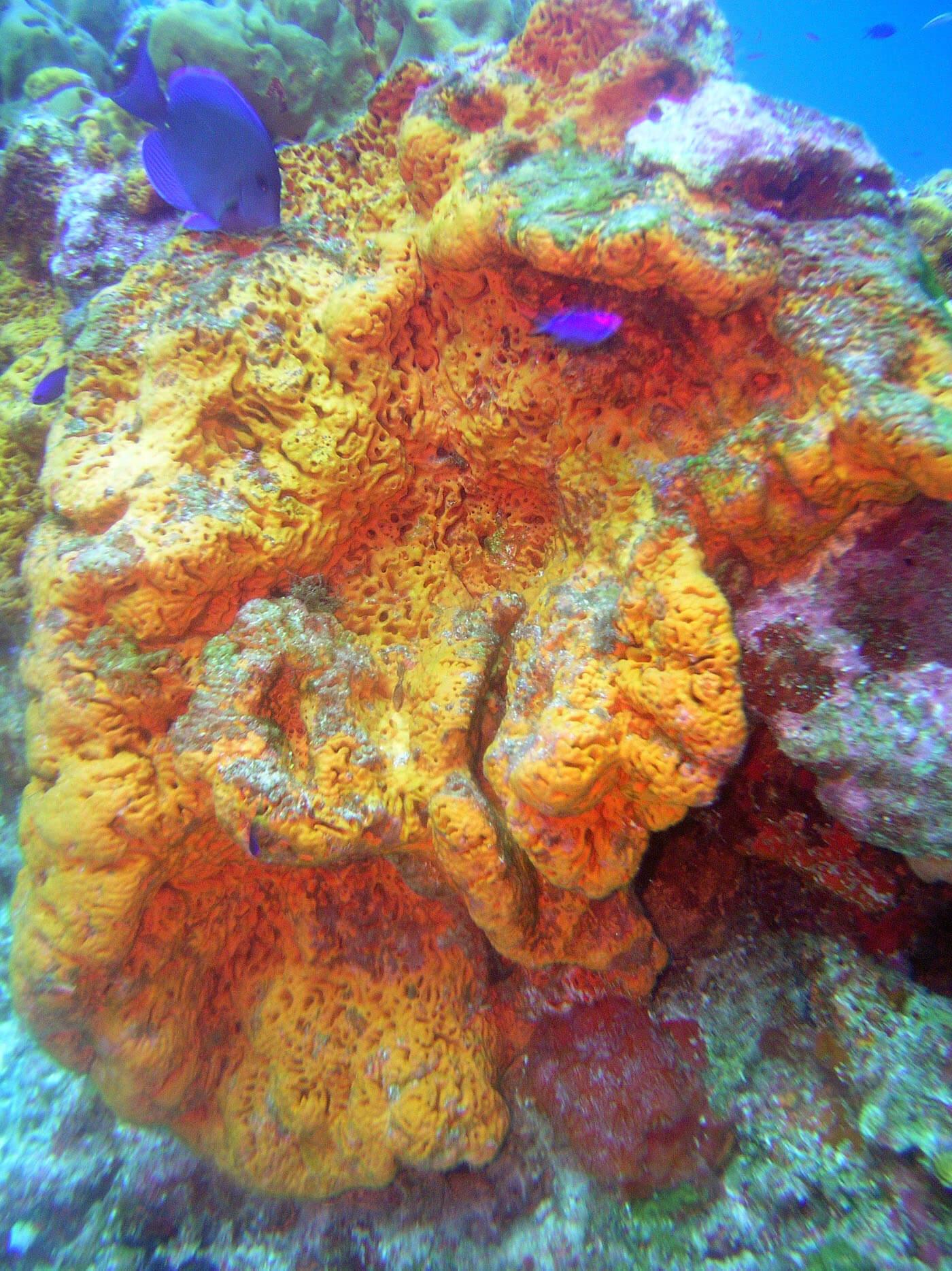 Isla Mujeres Manchones Reef Snorkel Scuba Diving Squalo Adventures-3
