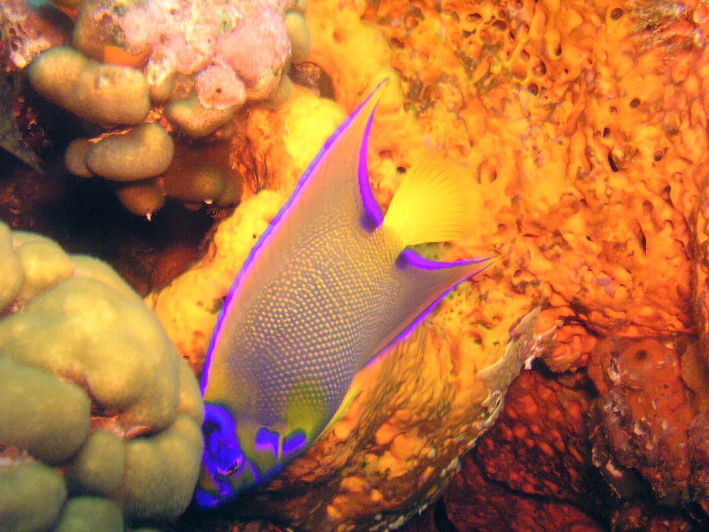 Isla Mujeres Manchones Reef Snorkel Scuba Diving Squalo Adventures-4