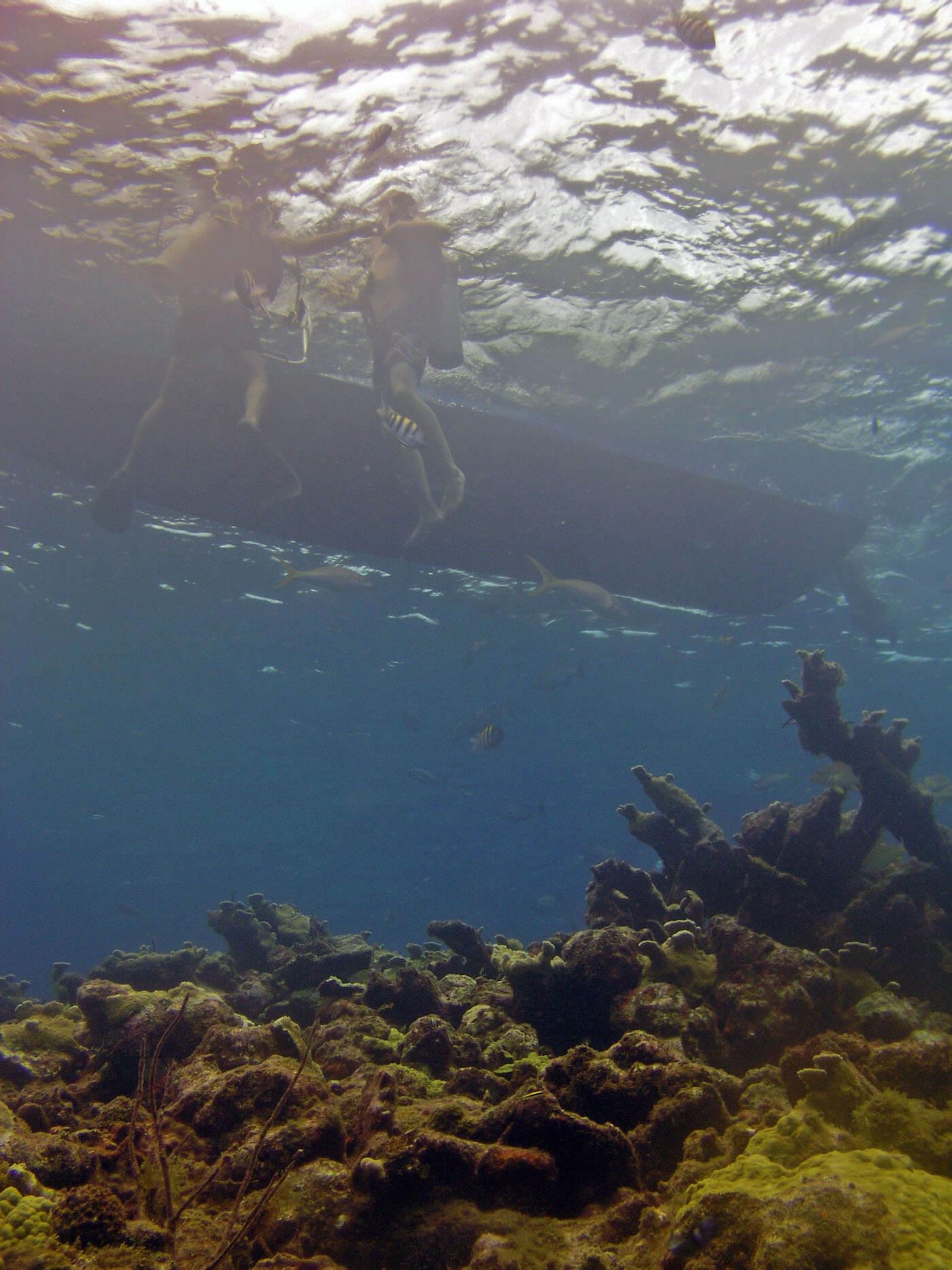 Isla Mujeres Manchones Reef Snorkel Scuba Diving Squalo Adventures-5