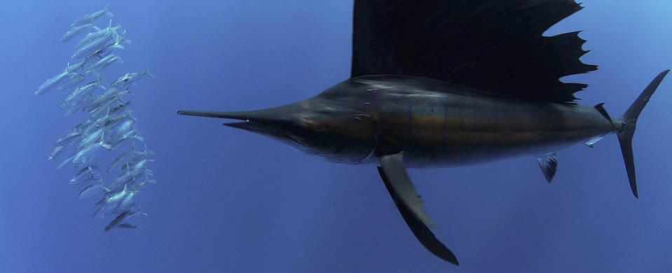 Isla Mujeres Sail Fish Snorkel Tour Squalo Adventures-3