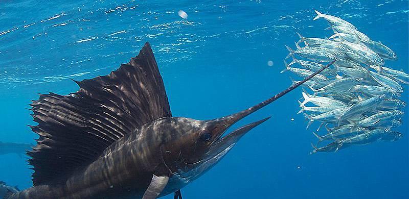 Isla Mujeres Sail Fish Snorkel Tour Squalo Adventures-5
