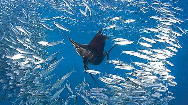 Isla Mujeres Sail Fish Snorkel Tour Squalo Adventures-6