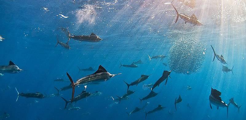 Isla Mujeres Sail Fish Snorkel Tour Squalo Adventures-7