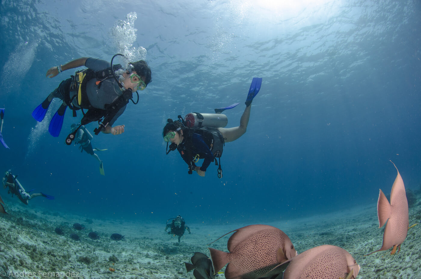 Isla Mujeres Scuba Diving Courses Squalo Adventures Dive Shop-14