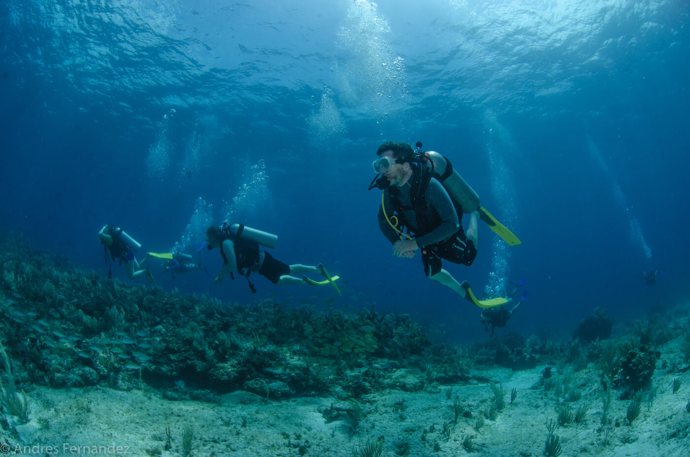 Isla Mujeres Scuba Diving Courses Squalo Adventures Dive Shop-22