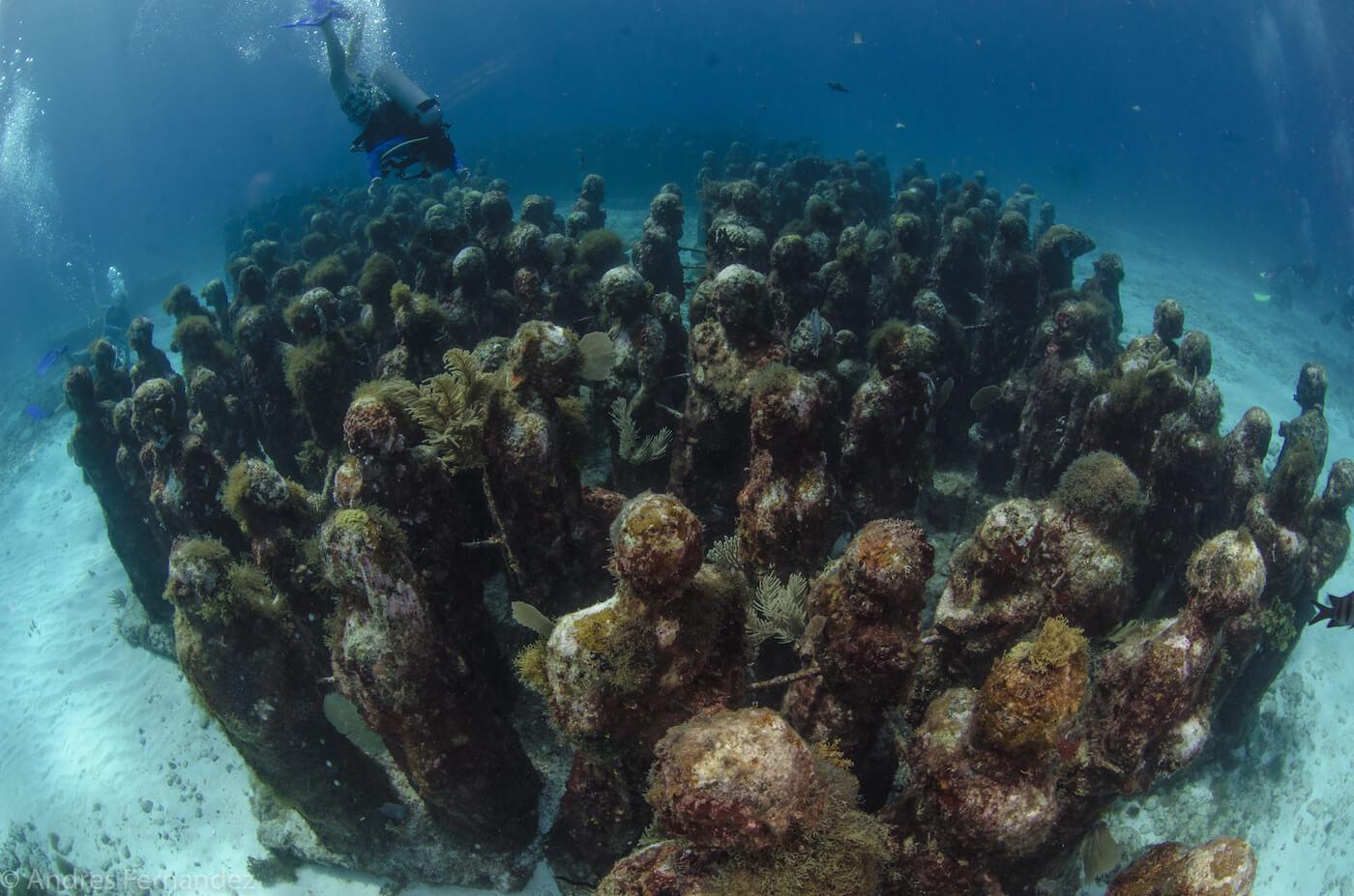 Isla Mujeres Scuba Diving MUSA Squalo Adventures-12