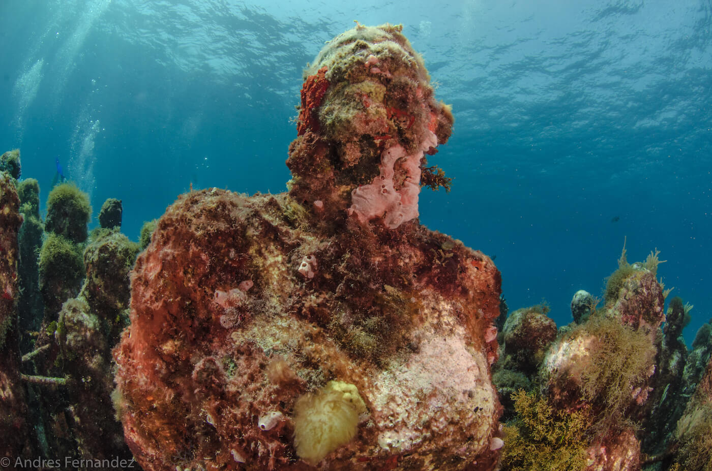 Isla Mujeres Scuba Diving MUSA Squalo Adventures-15