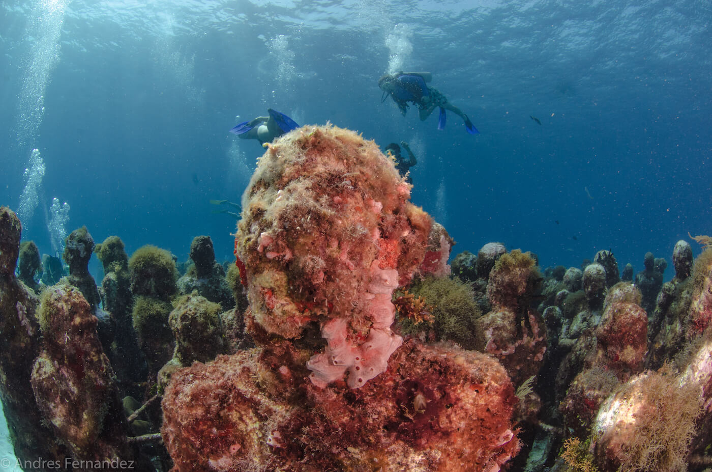 Isla Mujeres Scuba Diving MUSA Squalo Adventures-16