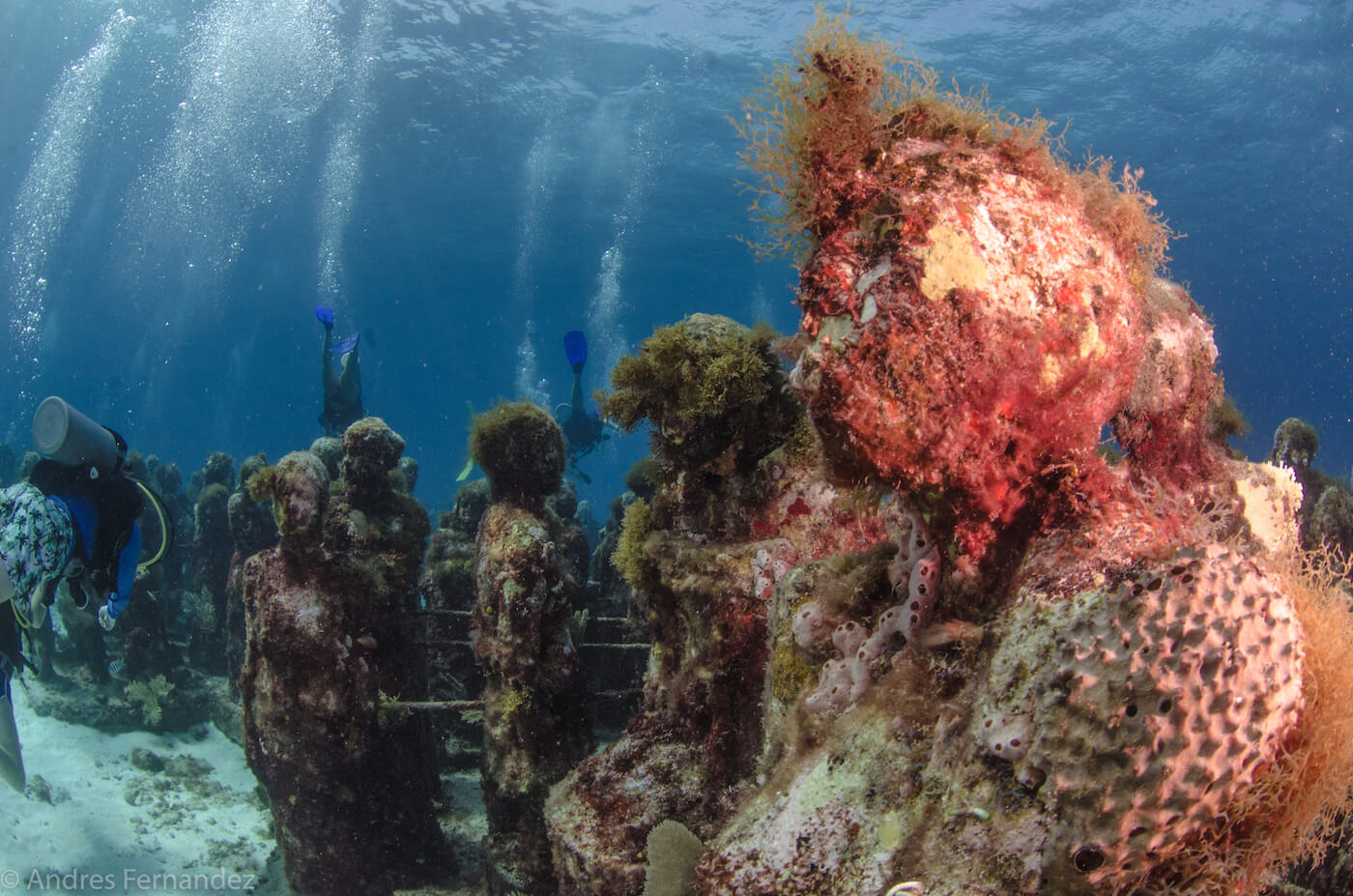 Isla Mujeres Scuba Diving MUSA Squalo Adventures-17
