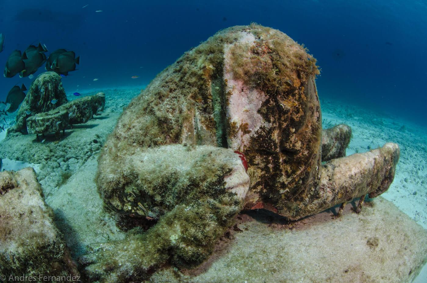 Isla Mujeres Scuba Diving MUSA Squalo Adventures-20