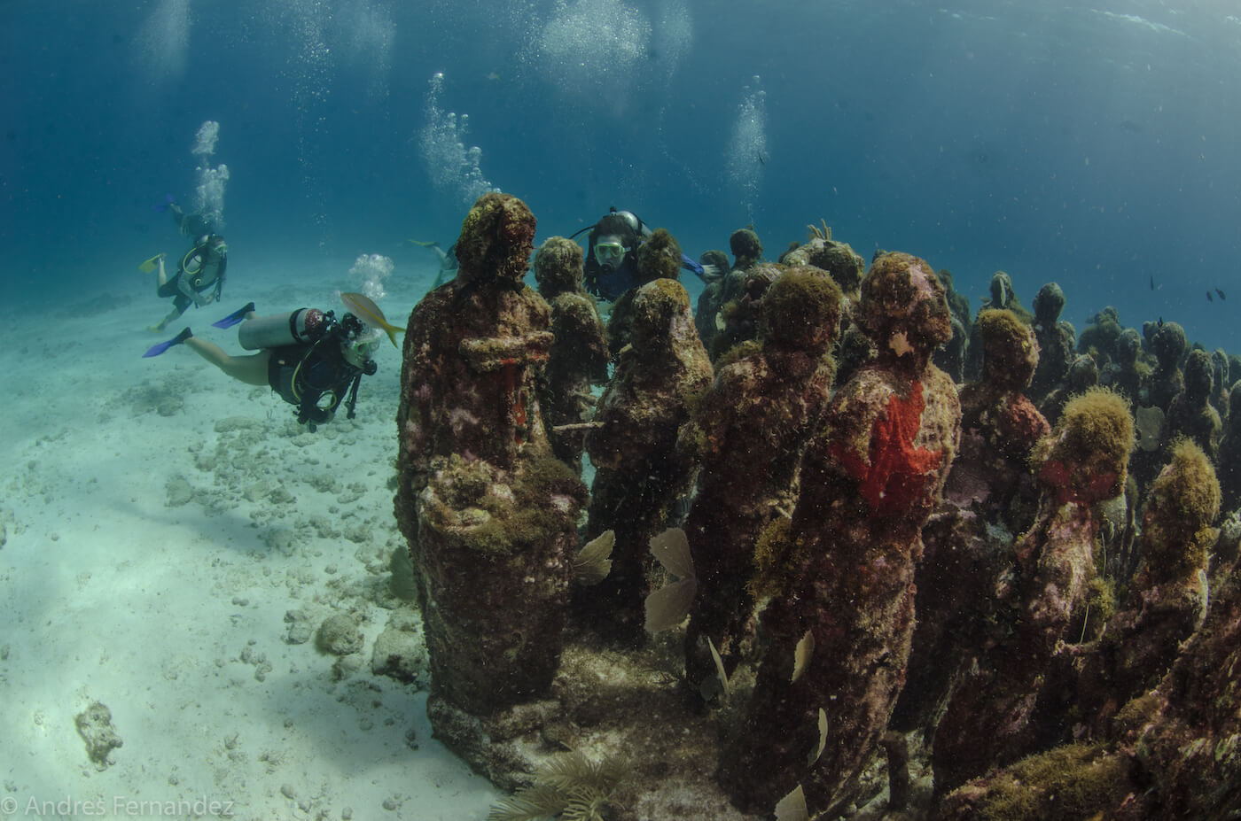 Isla Mujeres Scuba Diving MUSA Squalo Adventures-5