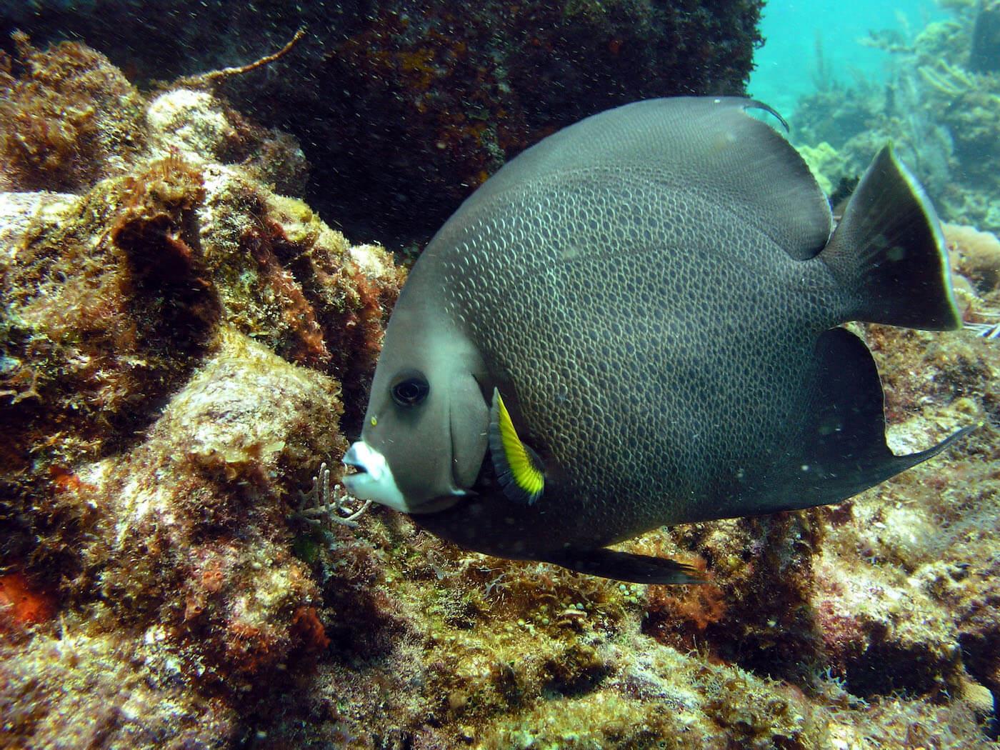 Isla Mujeres Scuba Diving Snorkeling Manchones Reef Squalo Adventures-1