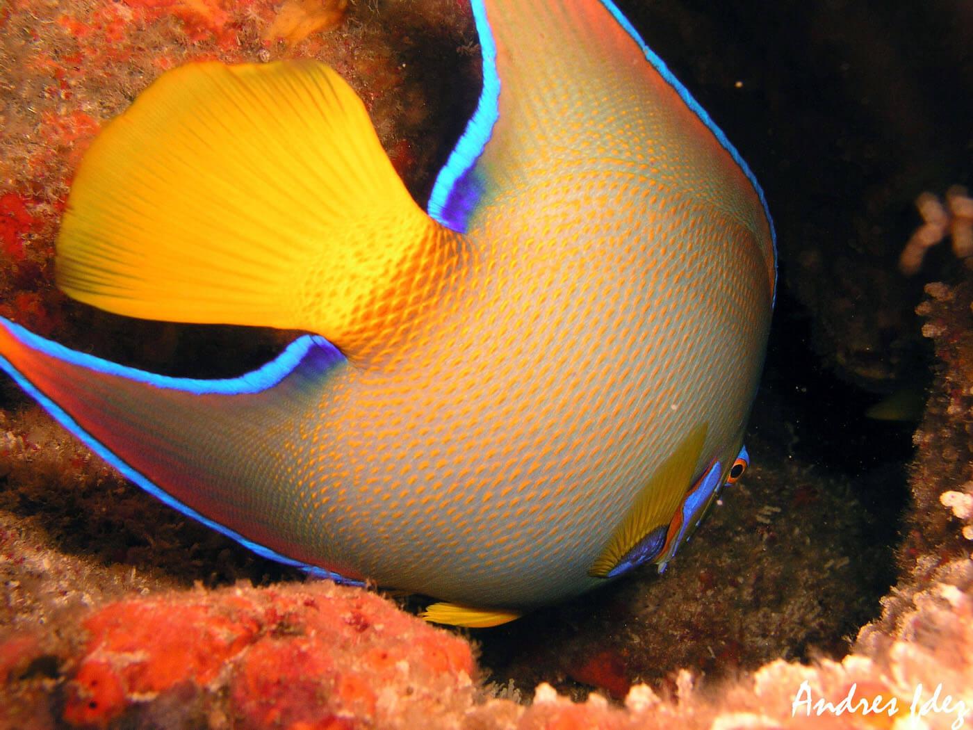 Isla Mujeres Scuba Diving Snorkeling Manchones Reef Squalo Adventures-10