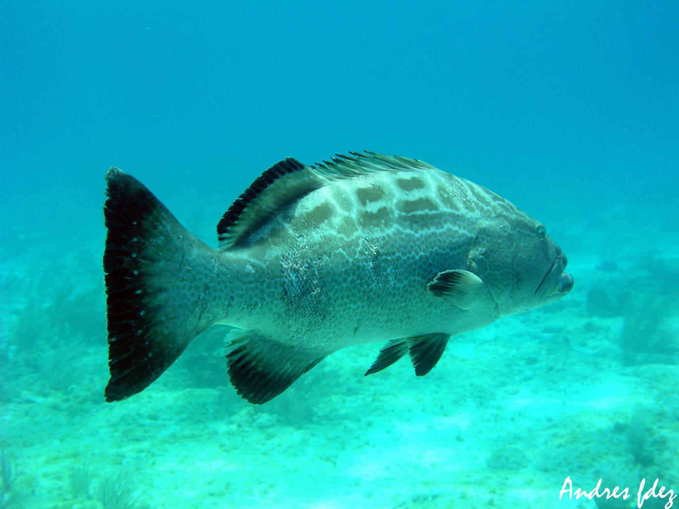 Isla Mujeres Scuba Diving Snorkeling Manchones Reef Squalo Adventures-14