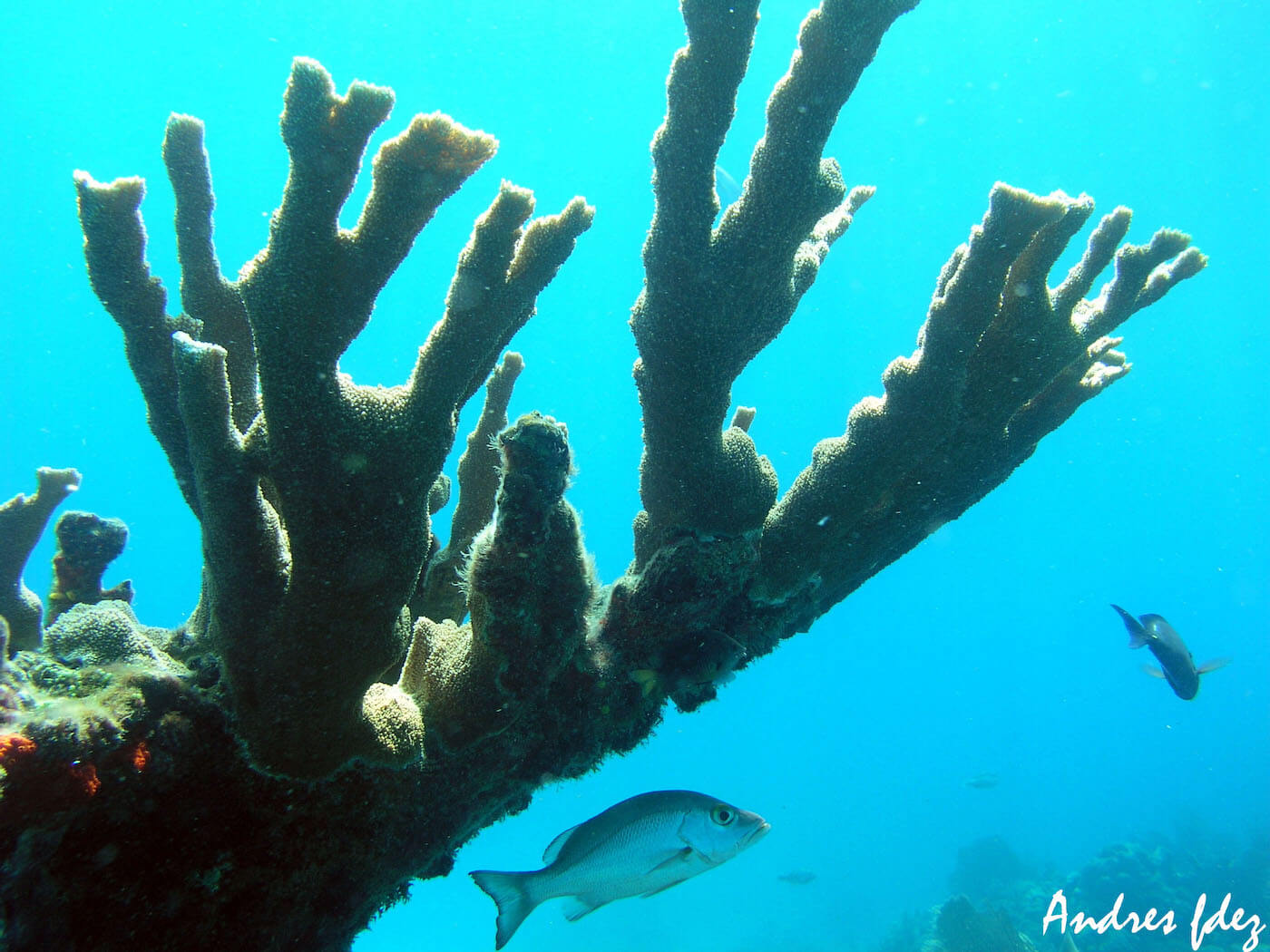 Isla Mujeres Scuba Diving Snorkeling Manchones Reef Squalo Adventures-16