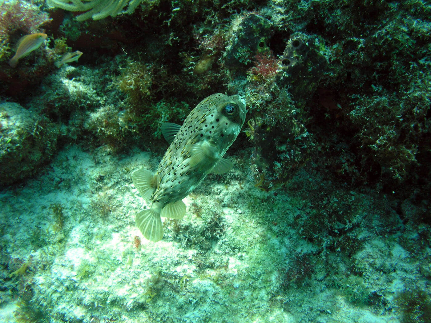 Isla Mujeres Scuba Diving Snorkeling Manchones Reef Squalo Adventures-18