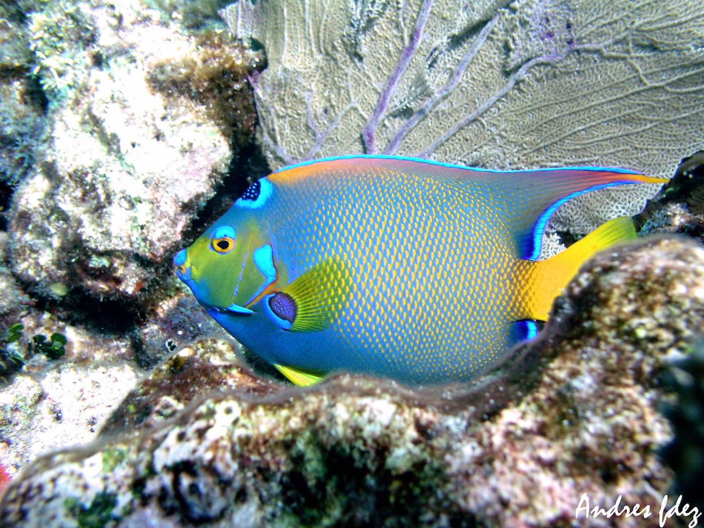 Isla Mujeres Scuba Diving Snorkeling Manchones Reef Squalo Adventures-20