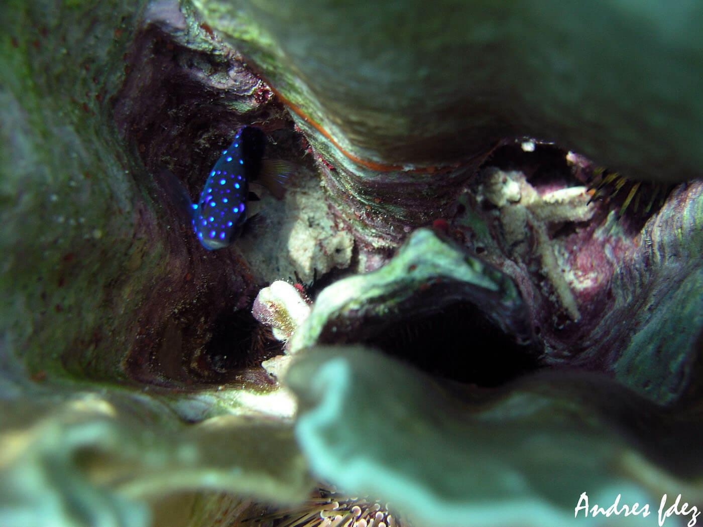 Isla Mujeres Scuba Diving Snorkeling Manchones Reef Squalo Adventures-22