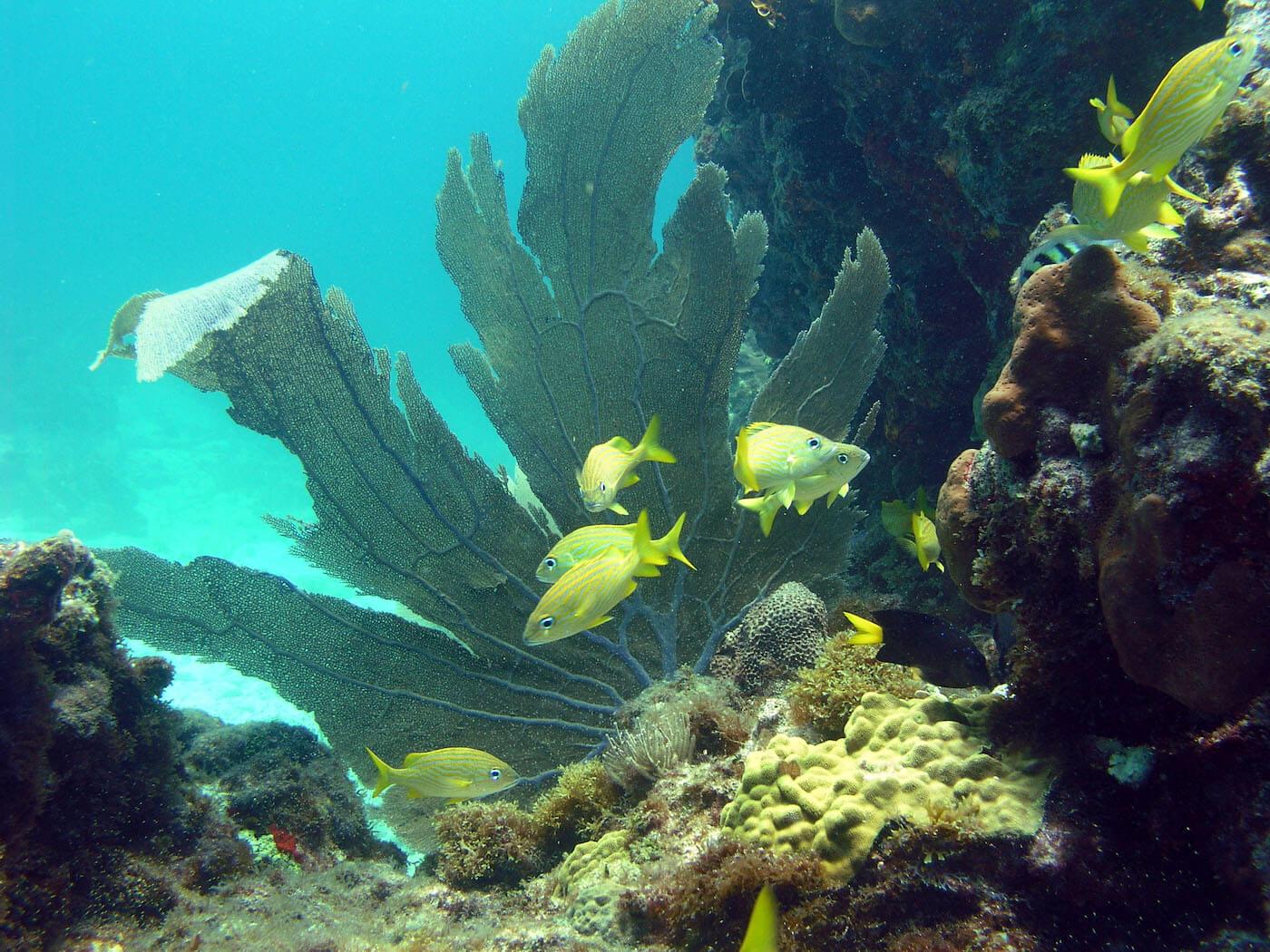 Isla Mujeres Scuba Diving Snorkeling Manchones Reef Squalo Adventures-23