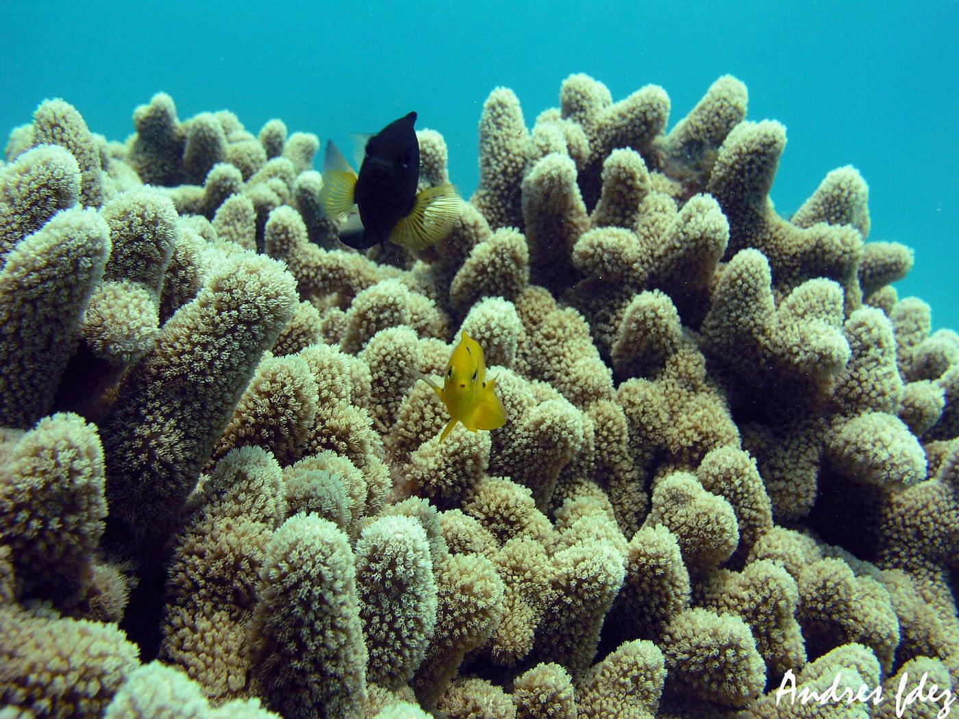 Isla Mujeres Scuba Diving Snorkeling Manchones Reef Squalo Adventures-24