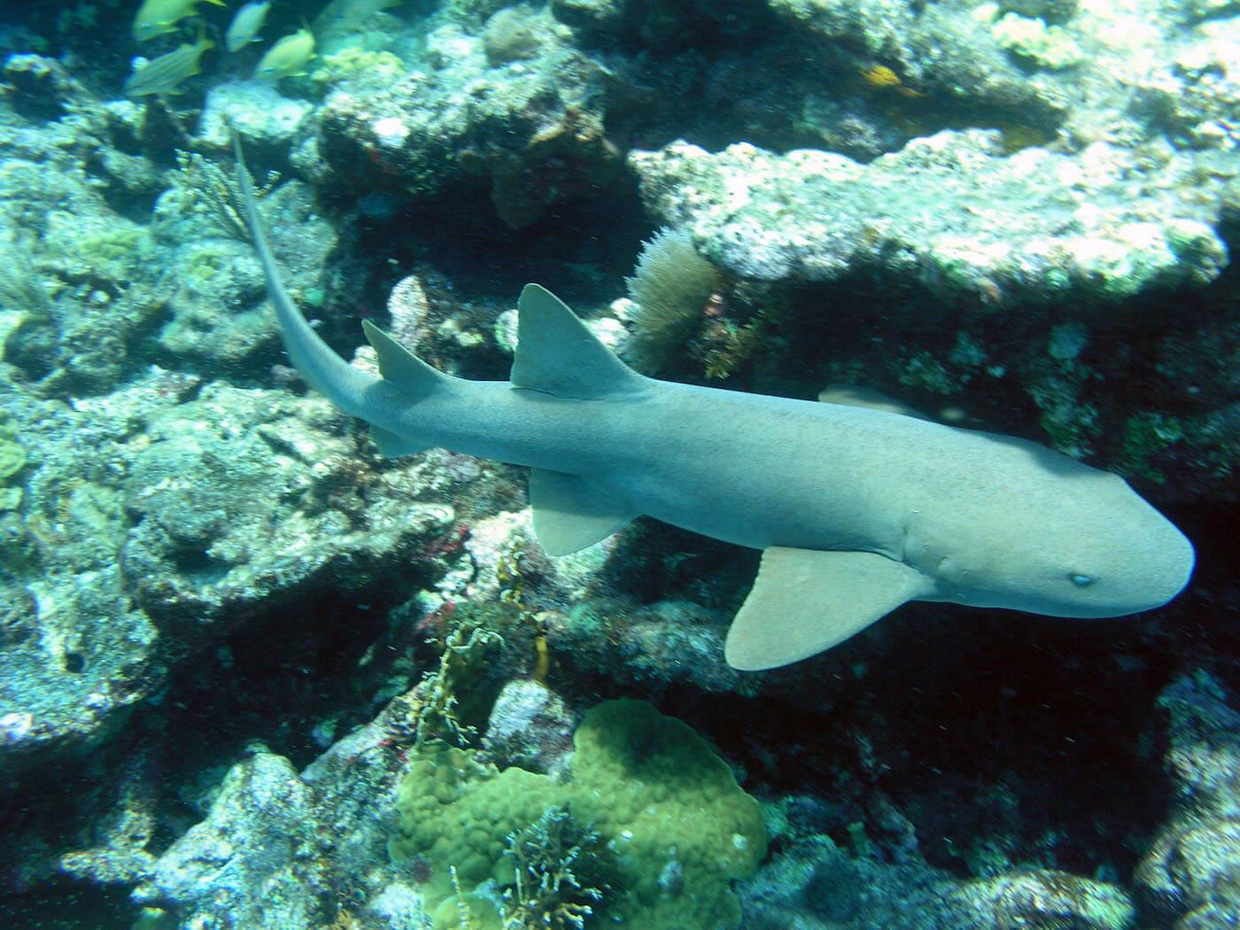Isla Mujeres Scuba Diving Snorkeling Manchones Reef Squalo Adventures-27