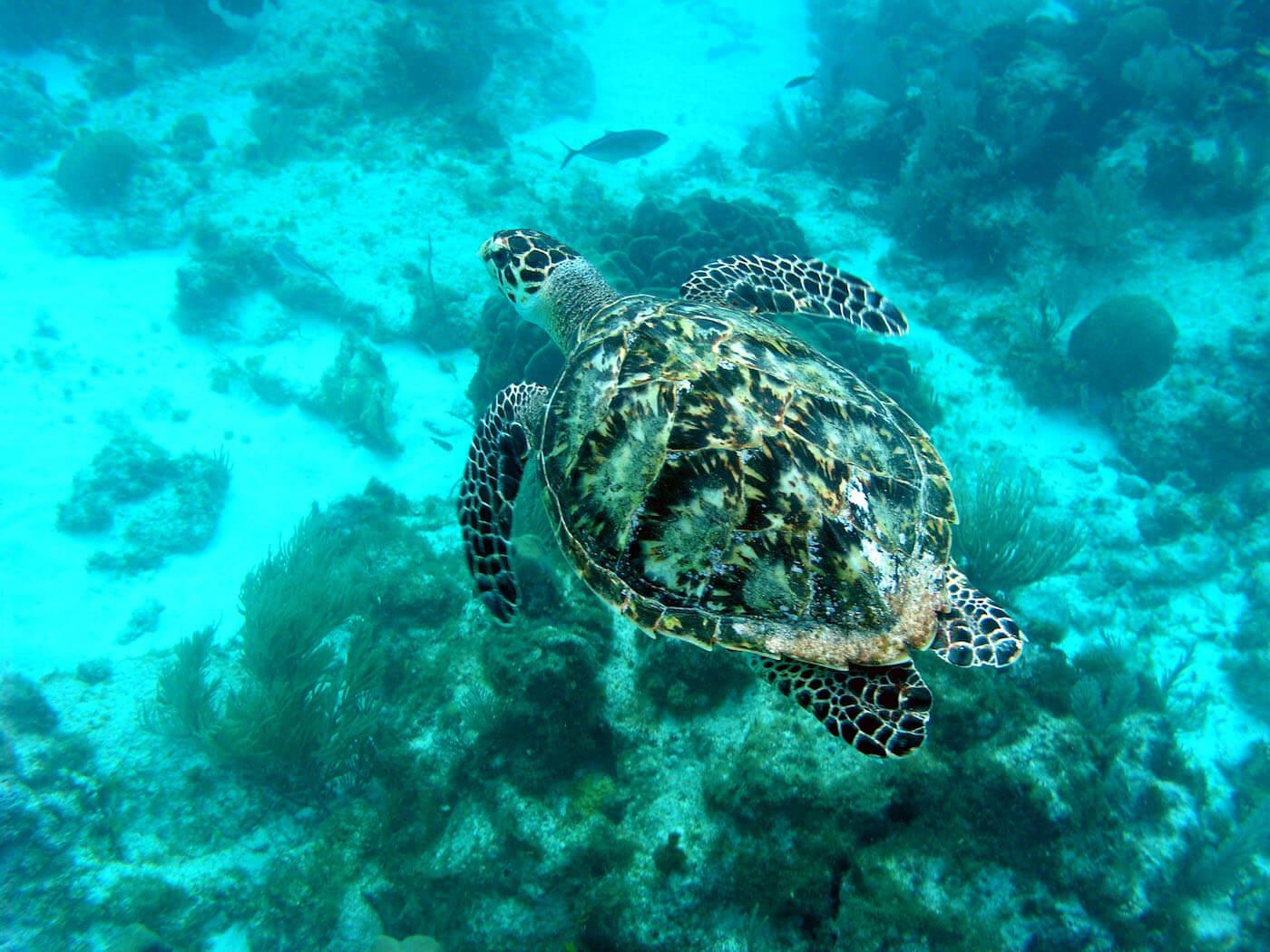 Isla Mujeres Scuba Diving Snorkeling Manchones Reef Squalo Adventures-29