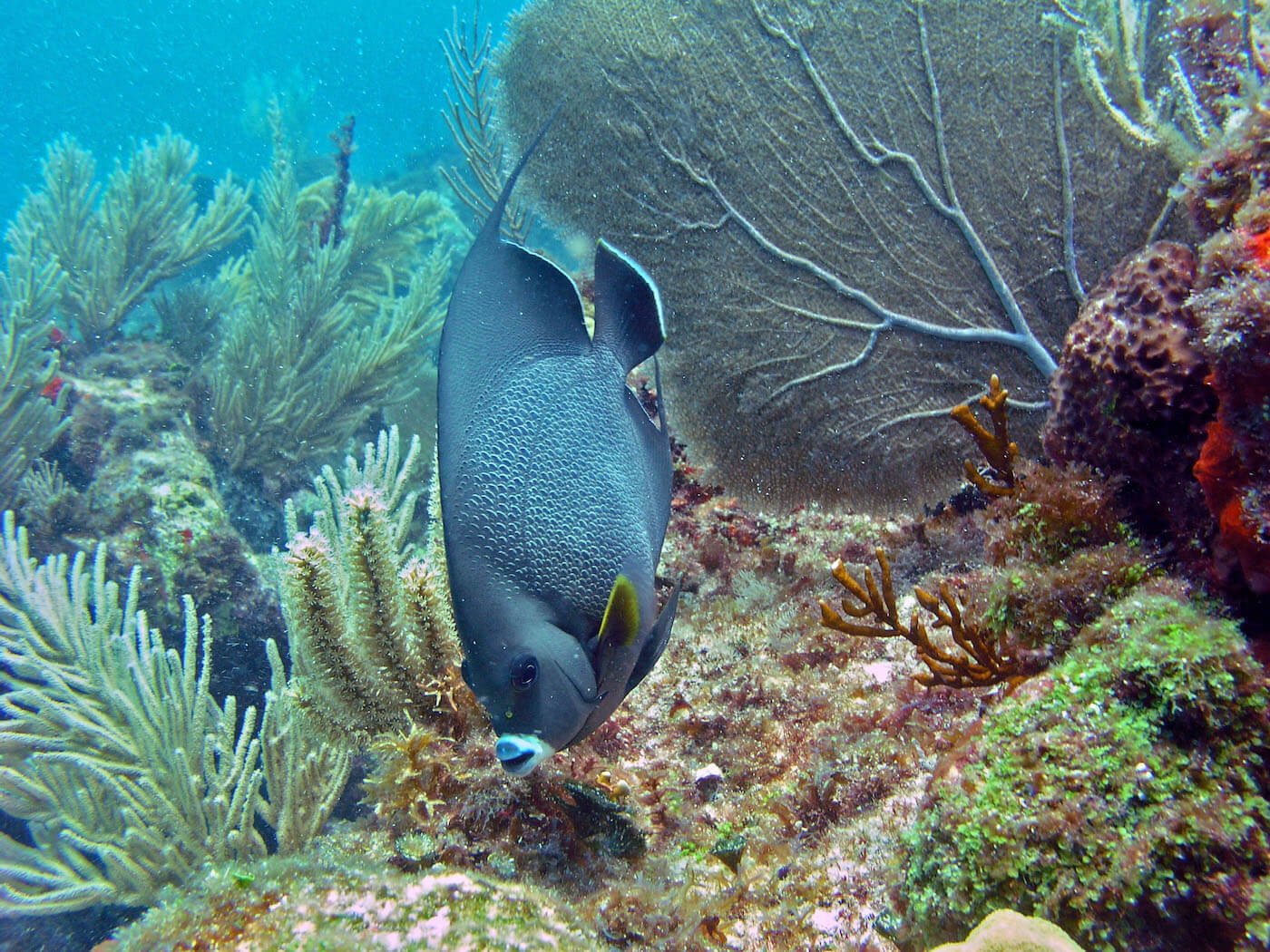 Isla Mujeres Scuba Diving Snorkeling Manchones Reef Squalo Adventures-3