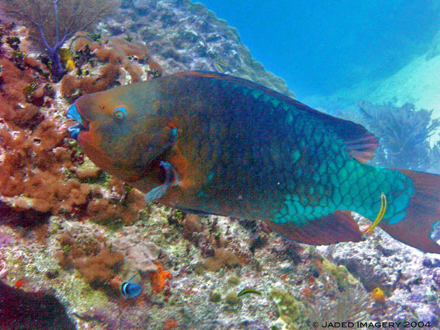 Isla Mujeres Scuba Diving Snorkeling Manchones Reef Squalo Adventures-34