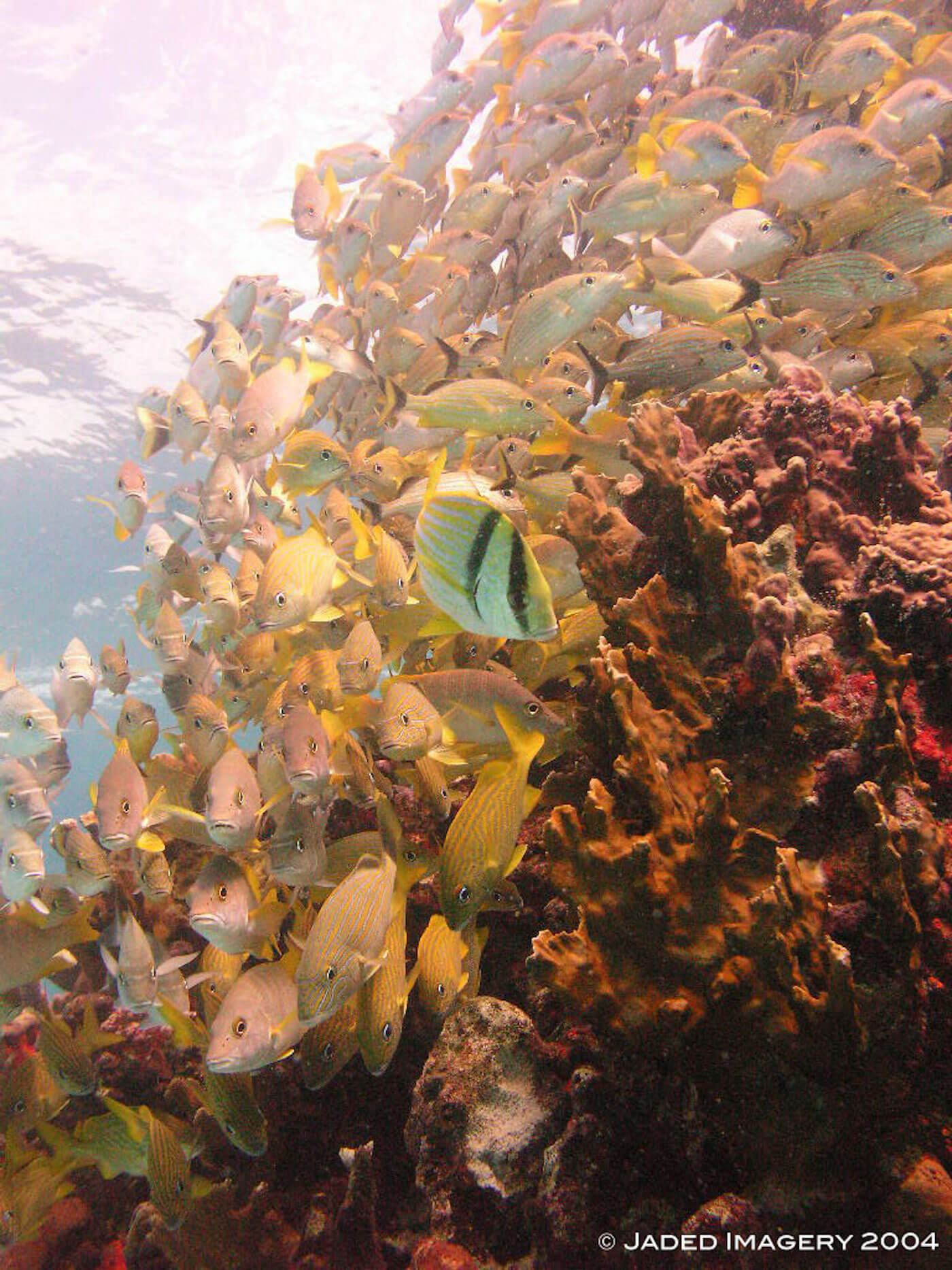 Isla Mujeres Scuba Diving Snorkeling Manchones Reef Squalo Adventures-36
