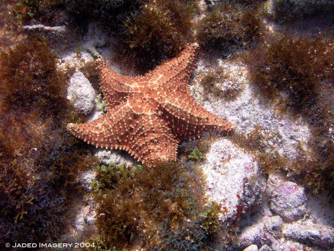 Isla Mujeres Scuba Diving Snorkeling Manchones Reef Squalo Adventures-37