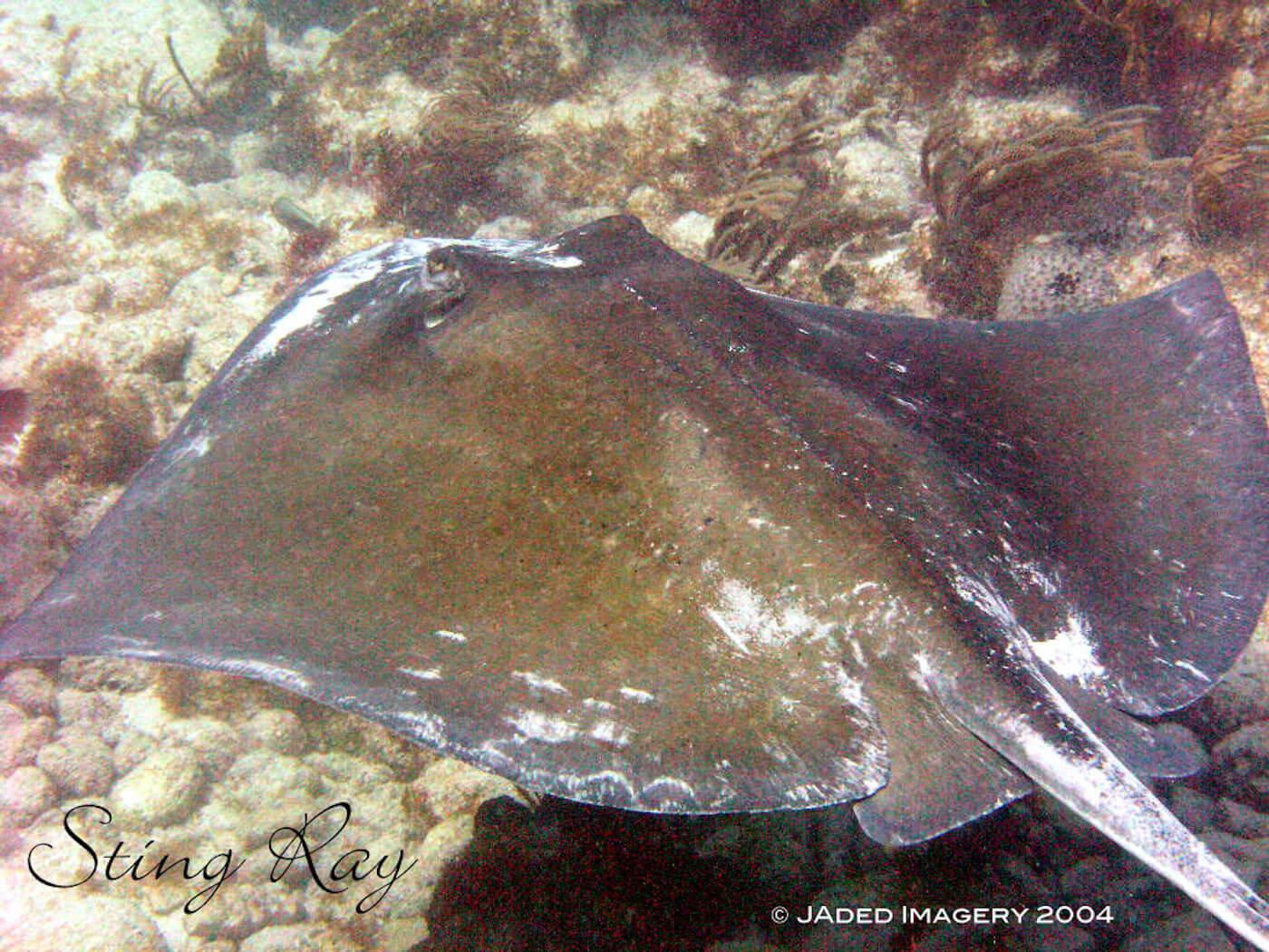 Isla Mujeres Scuba Diving Snorkeling Manchones Reef Squalo Adventures-38