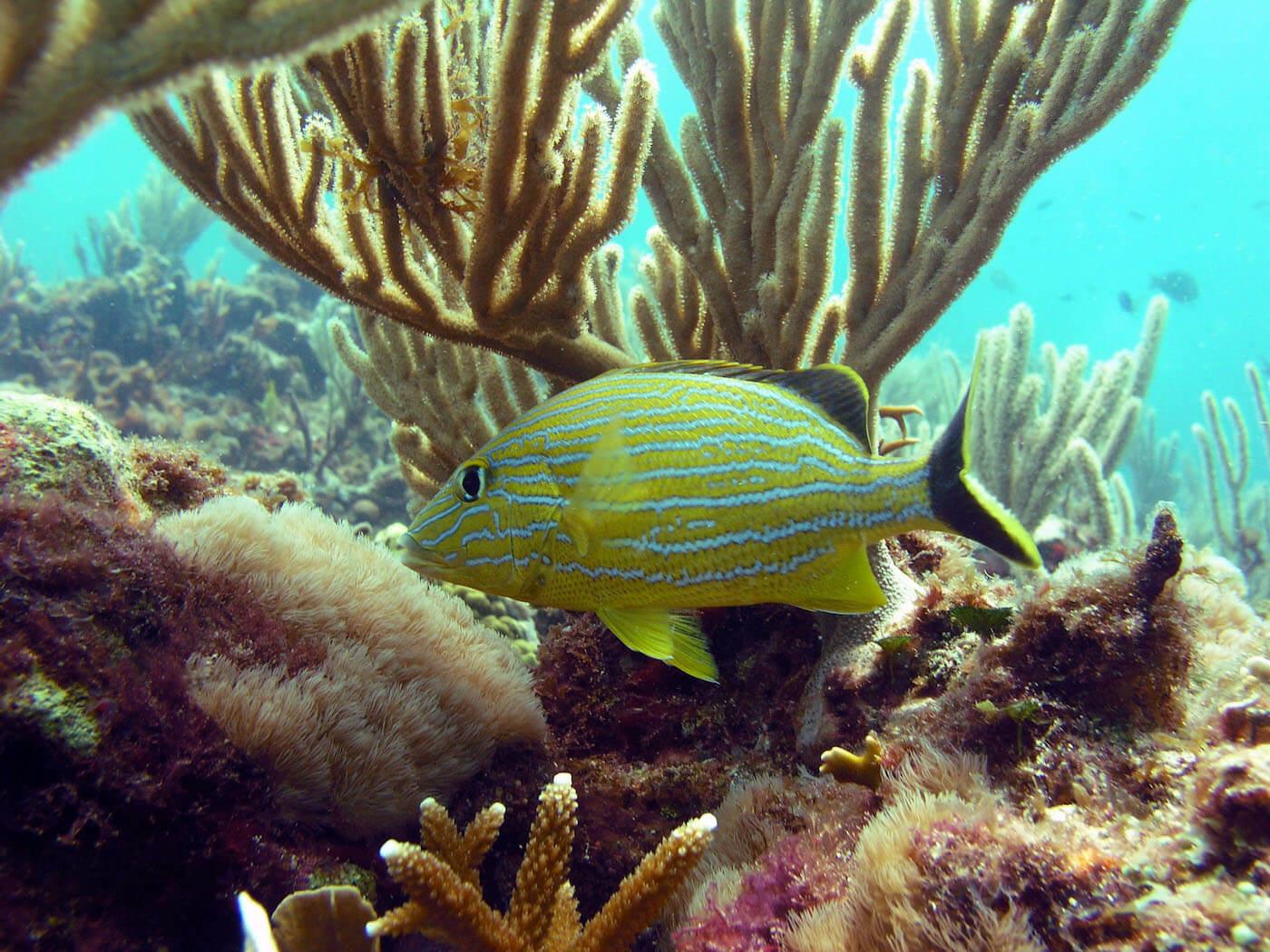 Isla Mujeres Scuba Diving Snorkeling Manchones Reef Squalo Adventures-4