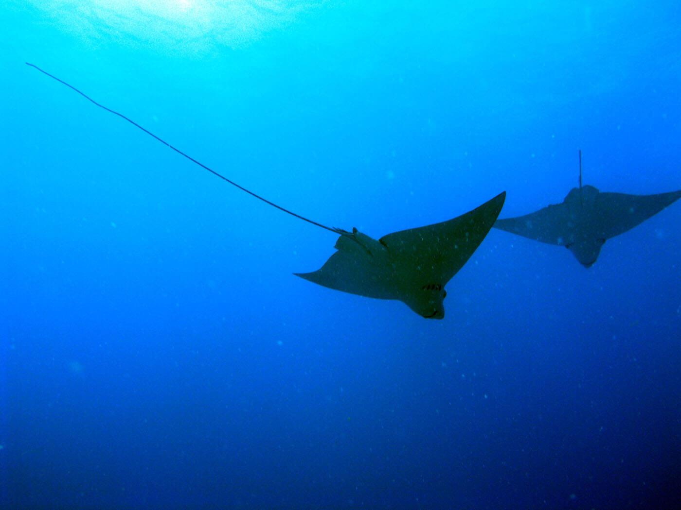 Isla Mujeres Scuba Diving Snorkeling Manchones Reef Squalo Adventures-43