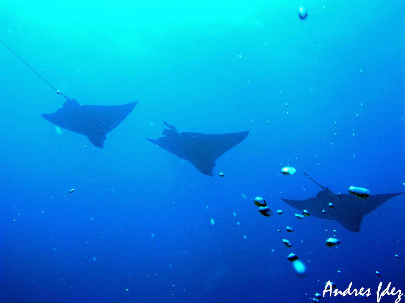 Isla Mujeres Scuba Diving Snorkeling Manchones Reef Squalo Adventures-44