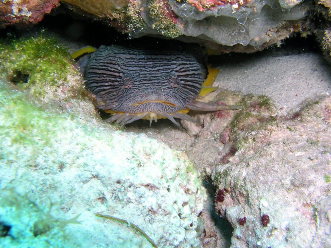Isla Mujeres Scuba Diving Snorkeling Manchones Reef Squalo Adventures-45
