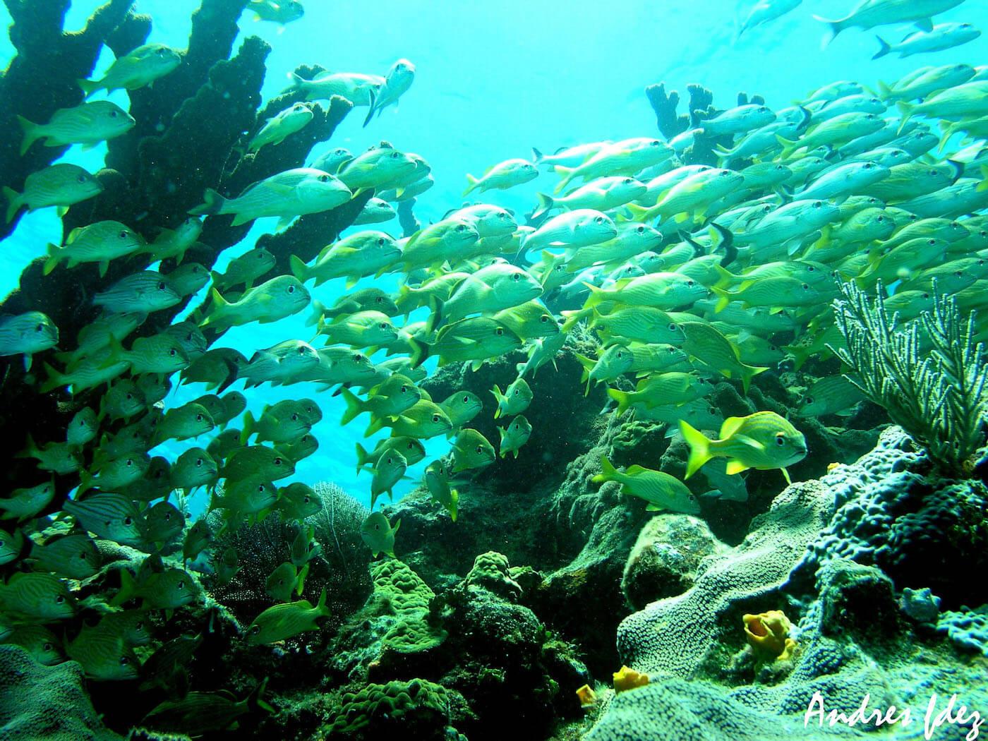Isla Mujeres Scuba Diving Snorkeling Manchones Reef Squalo Adventures-46