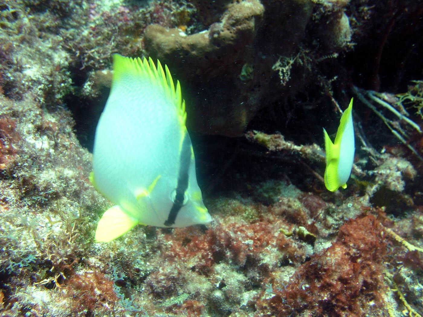 Isla Mujeres Scuba Diving Snorkeling Manchones Reef Squalo Adventures-48