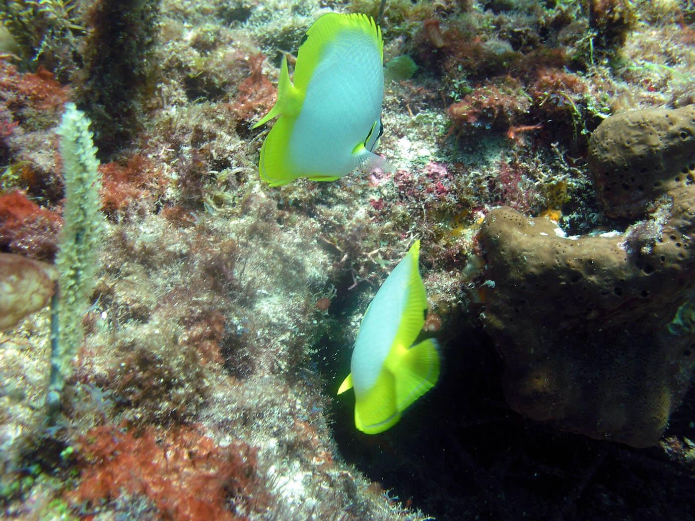 Isla Mujeres Scuba Diving Snorkeling Manchones Reef Squalo Adventures-49