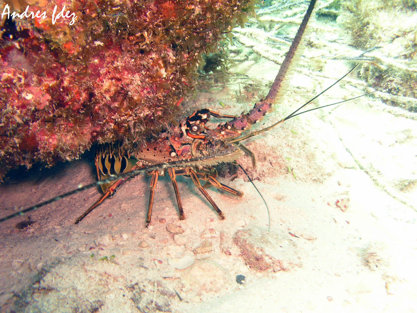 Isla Mujeres Scuba Diving Snorkeling Manchones Reef Squalo Adventures-6