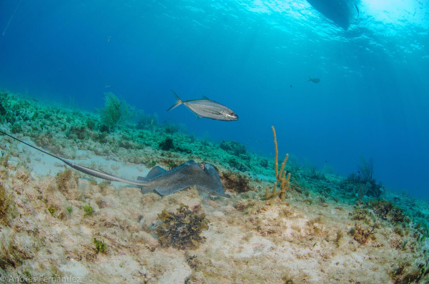 Isla Mujeres Scuba Diving Snorkeling Squalo Adventures-1