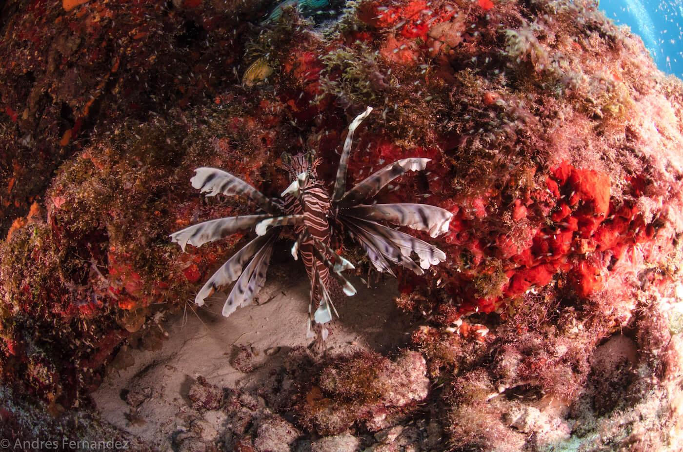 Isla Mujeres Scuba Diving Snorkeling Squalo Adventures-15