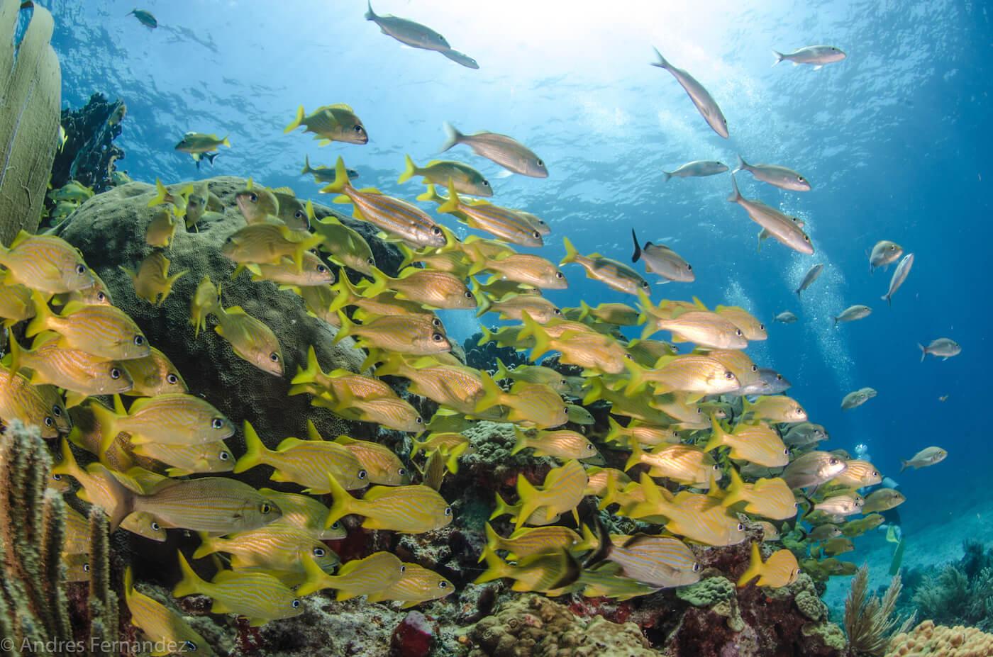 Isla Mujeres Scuba Diving Snorkeling Squalo Adventures-18