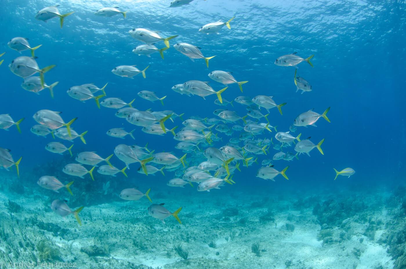 Isla Mujeres Scuba Diving Snorkeling Squalo Adventures-19